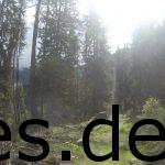 Ein magischer Eindruck eines Singletrail im Wald während der dritten Etappe des Transalpine-Runs. Copyright: Daniel Katzberg