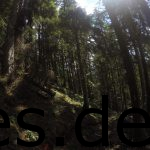 Als ich in diesem Wald ankam, war der halbe Abstieg gemeistert und damit VP 5 nicht mehr fern. (Copyright: Daniel Katzberg)