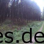 Bei Km 27 sind wir weiterhin im dichten Wald. (Copyright: Daniel Katzberg)