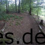 Bei Km 31 laufen wir durch den Märchenwald. (Copyright: Daniel Katzberg)