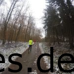 Km 4,5 geht es immer weiter leicht bergauf im Wald. (Copyright: Daniel Katzberg)