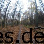 Km 8: Ein langes, gut laufbares Stück am Ende der Wald-/Schlossrunde. (Copyright: Daniel Katzberg)