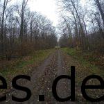 Km 14: Wir sind nun im ersten Waldabschnitt in der zweiten Teilstrecke. (Copyright: Daniel Katzberg)
