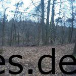 Km 19,5: Beim Anstieg zur Wurzel-Klippe sah man zerstörte Waldabschnitte und tiefe Schluchten. Dieser Anblick hat mich traurig gemacht. Der arme Wald. (Copyright: Daniel Katzberg)