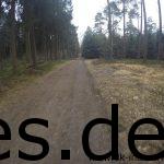 Km 21,5: So sieht das letzte Stückchen Wald aus bevor es auf Forstwege und abschließend die Zielstraße geht. (Copyright: Daniel Katzberg)