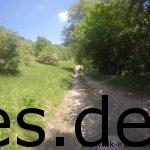 Km 26: Single-Trail und Forstweg wechseln sich hier ab im Tal nach dem Downhill. (Copyright: Daniel Katzberg)