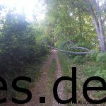 Km 40,5: Einfach unter einen halben Baum klettern. Die Strecke bietet viel. (Copyright: Daniel Katzberg)