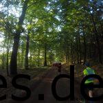 Km 5: Die Hauptansicht des Tages: Laufen im Wald. (Copyright: Daniel Katzberg)