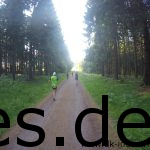 Km 8: Laufen im Wald. (Copyright: Daniel Katzberg)