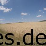 Km 57: Der Blick nach rechts. Man sieht einige Läufer zwischen den Feldern. (Copyright: Daniel Katzberg)